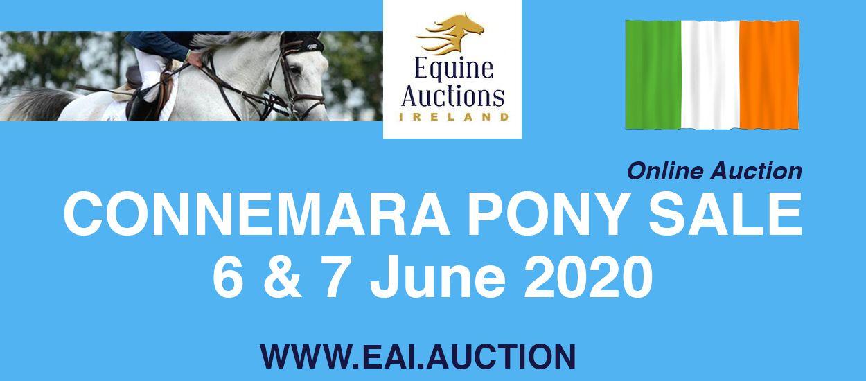 Equine Auctions_edited-2 (1).jpg