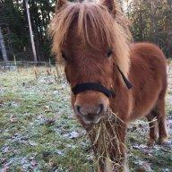 cushings syndrom häst
