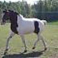 kastrering häst komplikationer